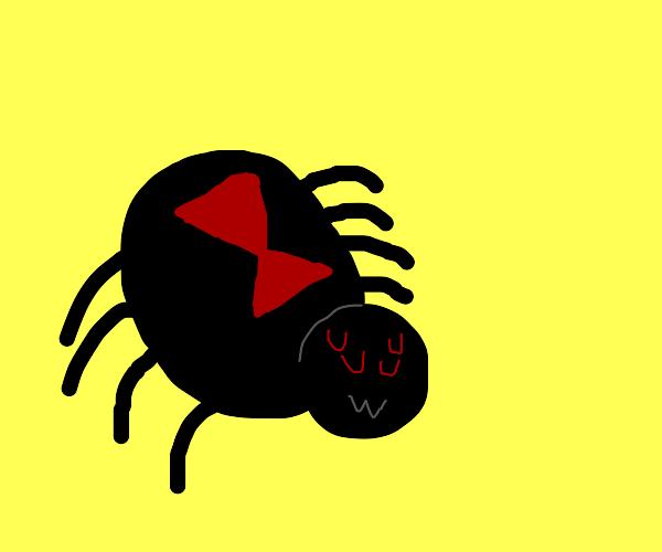 Black Widow spider does an uwu