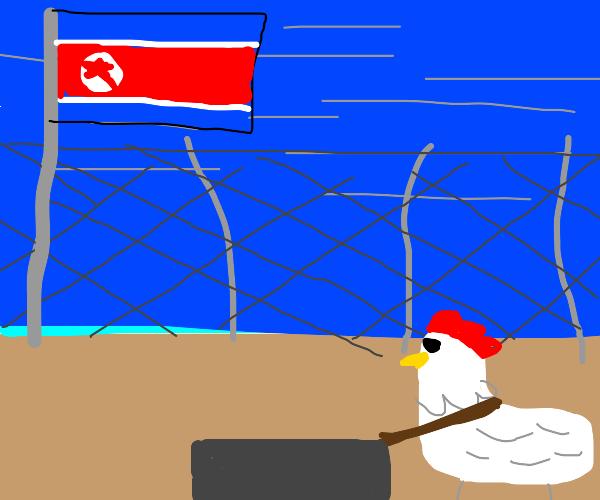 Chicken pushing wheelbarrow in North Korea