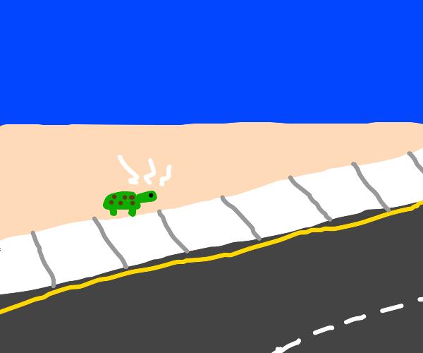 Turtle nervously crosses road