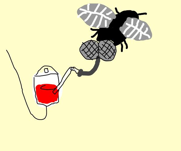 blood sucking flies