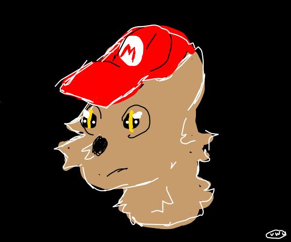 mad cat with mario cap