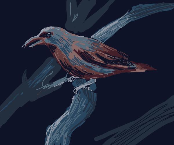 Purple qnd yellow bird
