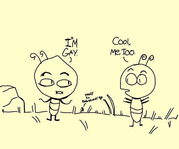 Gay bugs