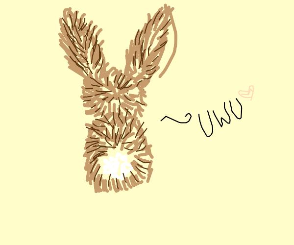 bunny uwu