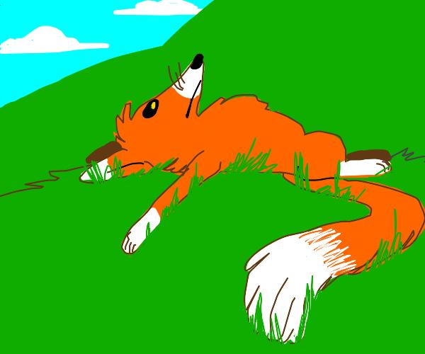 Bored Fox