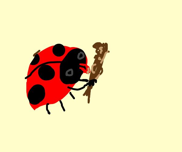 Ladybug licking a poop stick