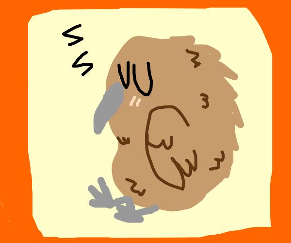 sleeping kiwi