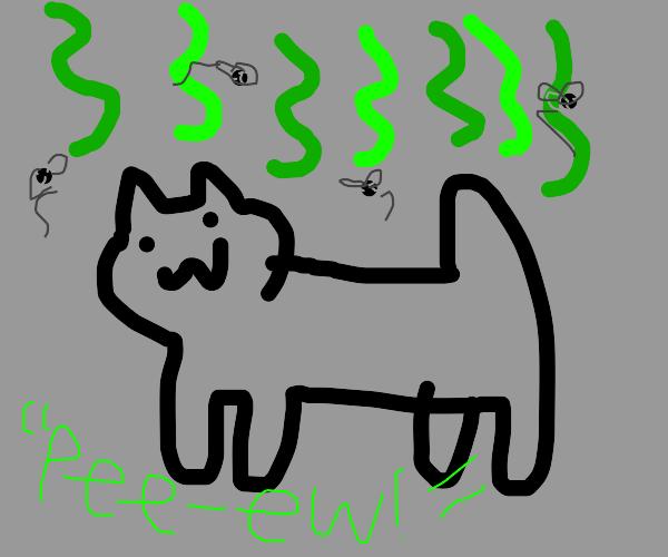 Stinky cat