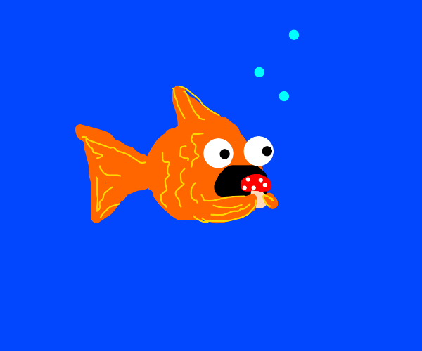 gold fish eating shrooms