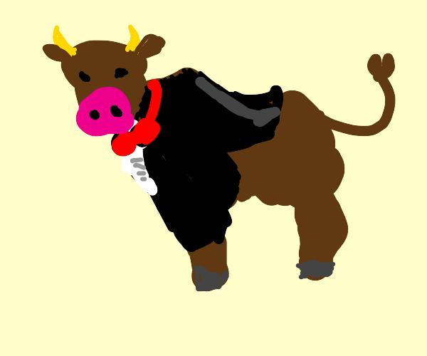 fancy bull