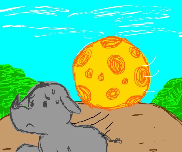 Rhino running away from a big cheese ball