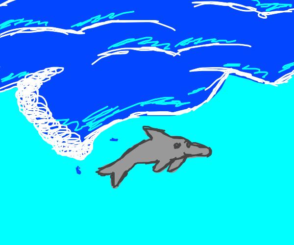 ocean upward