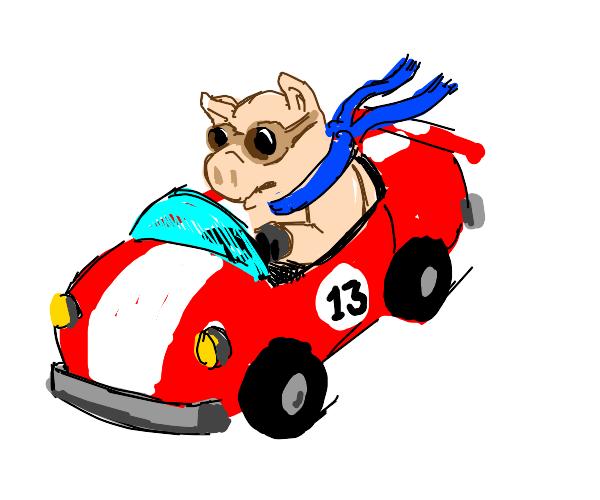 pig on a racing car