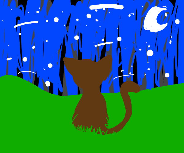 Brown kitty surrounded by stars