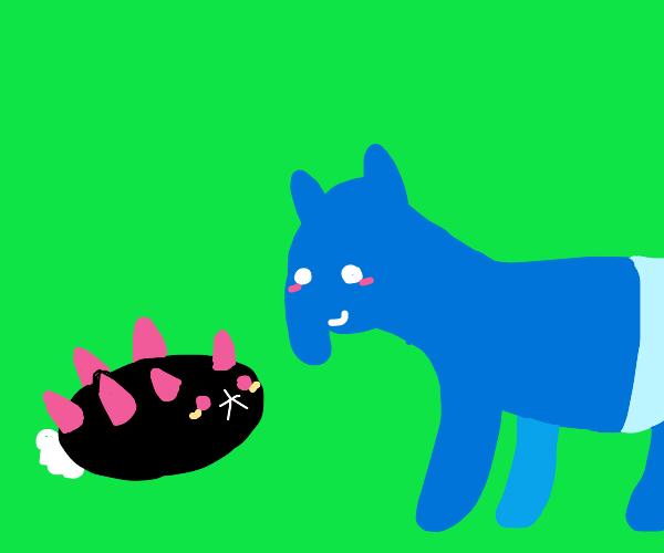 Pyukumuku meets blue tapir