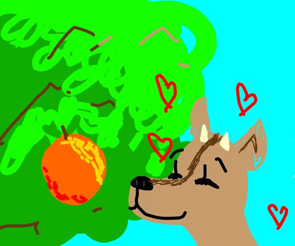 Deer loves orange