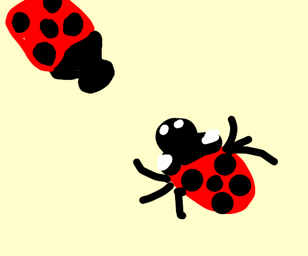 two ladybugs getting divorced