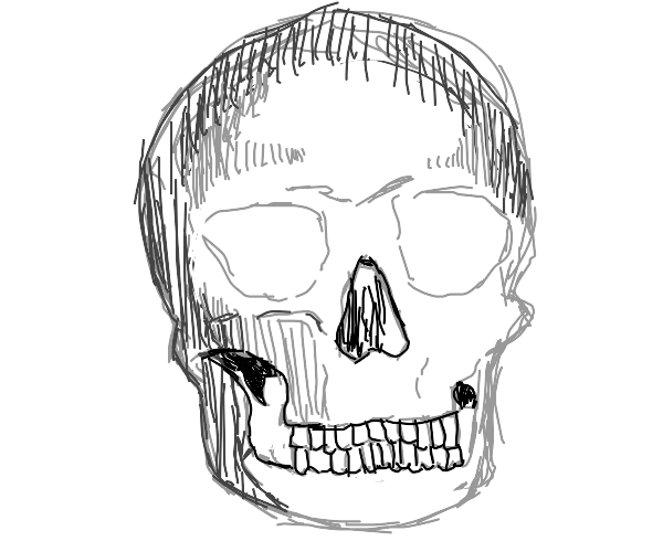 skull looks at you