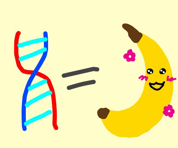 your  dna is ... kawai banana?