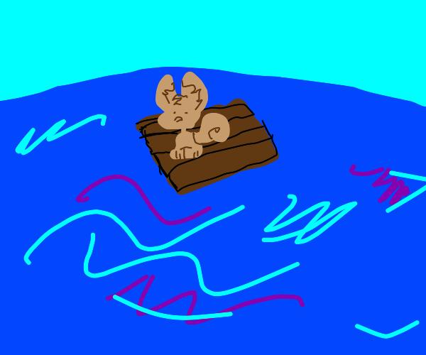 squirrel on a raft