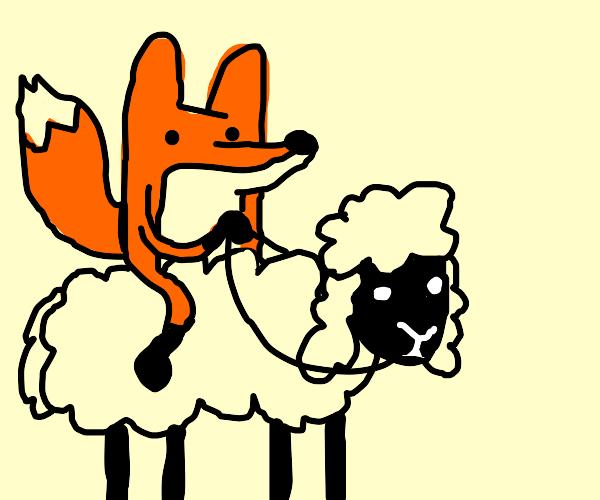 fox riding on a sheep