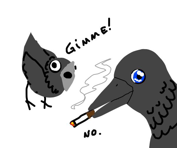 crow wants the cigarette another crow has