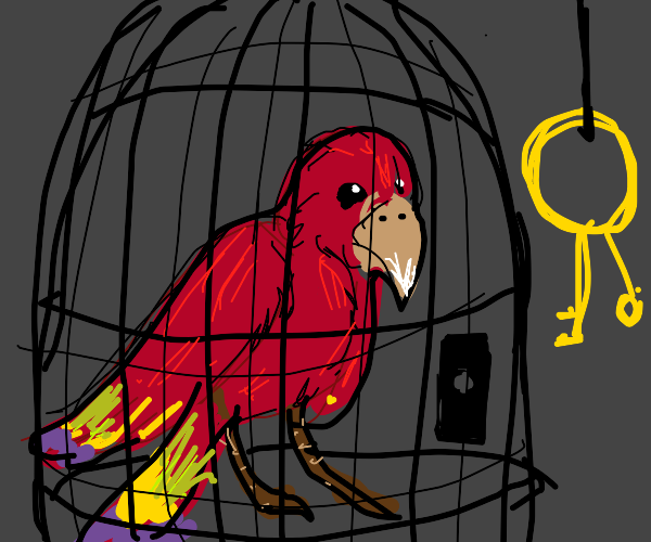 Scarlet macaw stuck in a cage