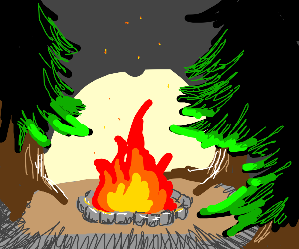 campfire in pinewoods
