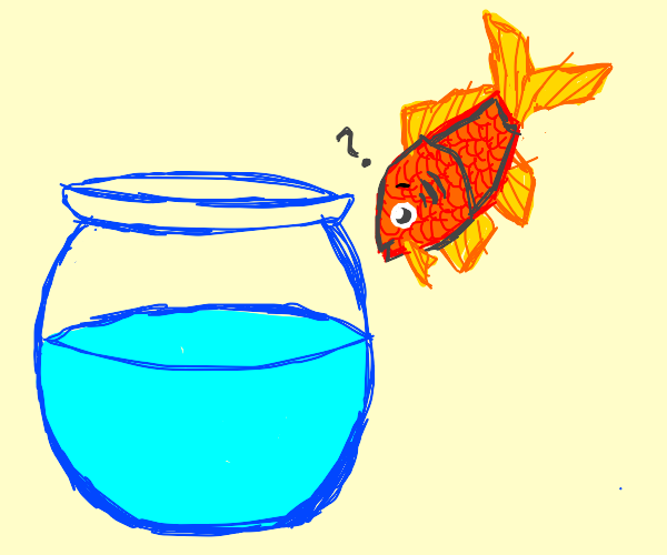 Fish confused by water