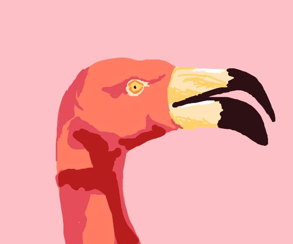 surprised flamingo