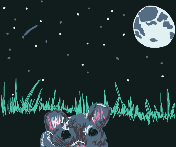 mouse in the grass at night