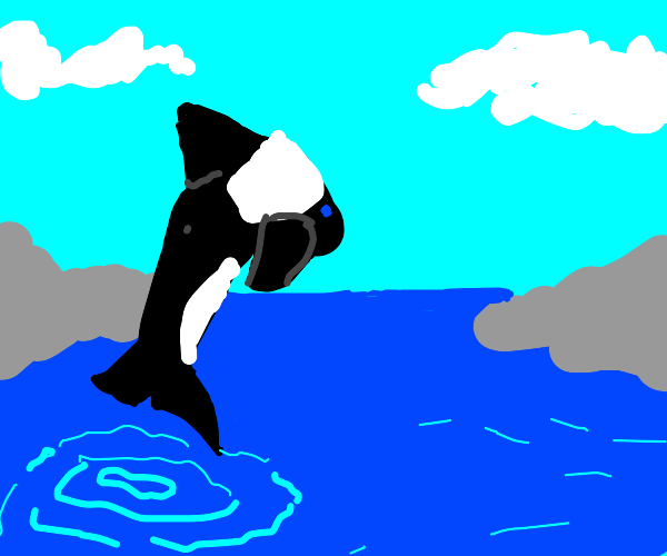 Orca jumping out of the ocean