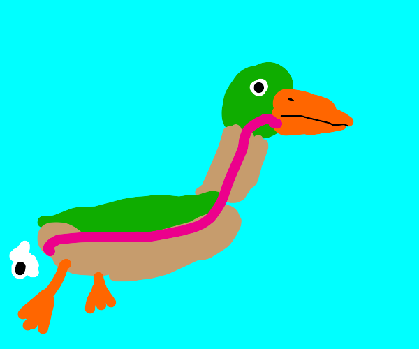 A duck's digesive system in great detail.