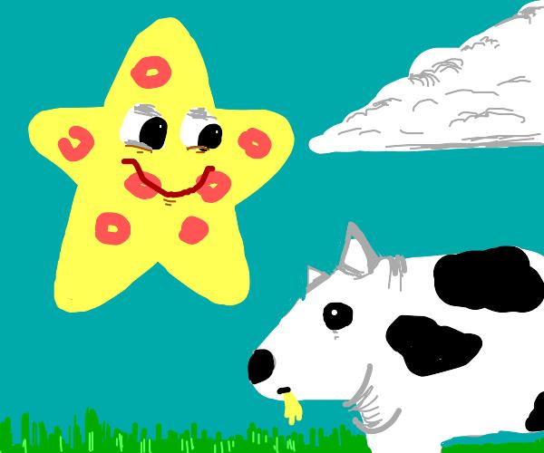 Starfish staring creepily at Cow