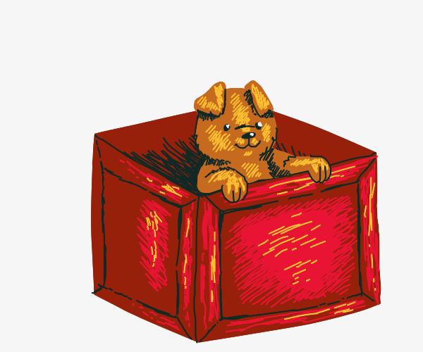 Puppy in crate