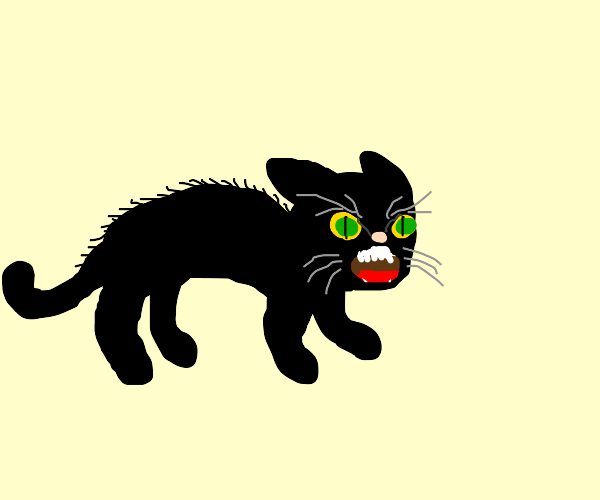 Cat is very angry