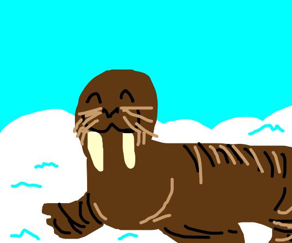 happy walrus