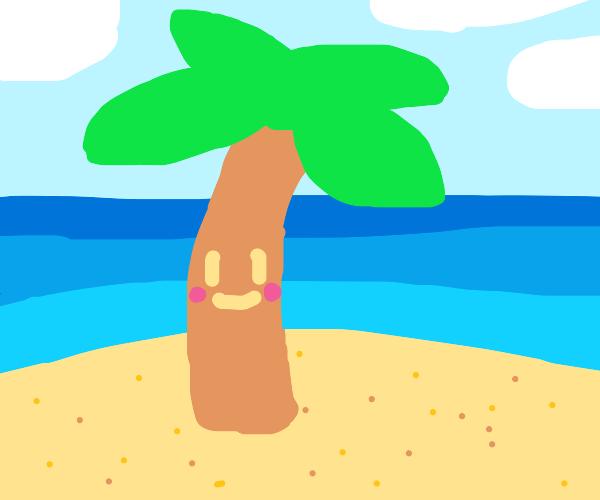 blushing palm tree