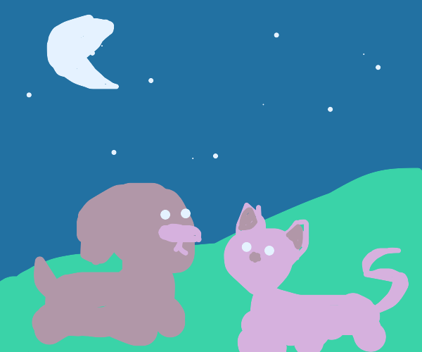 cat and dog look at the night sky