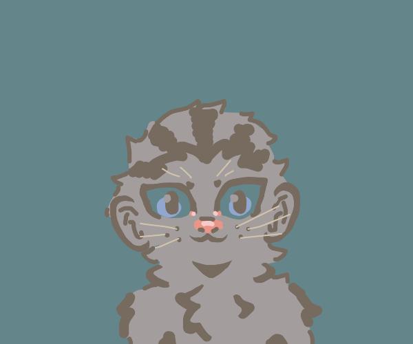 gray cat, blue eyes, human ears(grey)