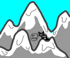 sassy mountain cat