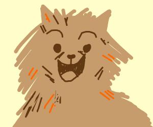 A Pomeranian cat