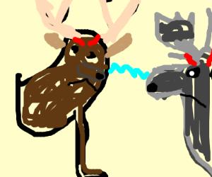 Deer vs Moose