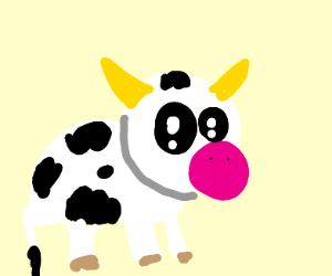 a cute cow