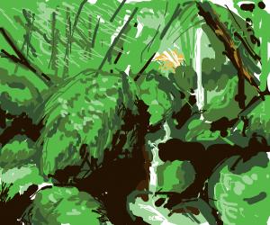 A lush jungle