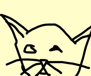 bad looking cat