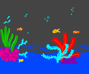 colorful coral reef and fish