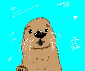 Surprised Otter