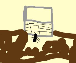 Ant loves Laptop