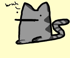Calico cat sitting